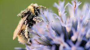 abeilles-pepinieres-imbert