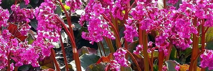plantes de terrain sec
