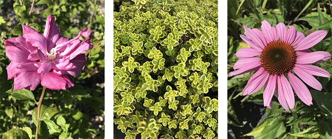 vegetaux-savoir-faire-pepinieres-imbert